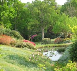National Garden Scheme opening at High Beeches