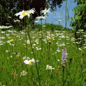 Wildflower Spectacular at High Beeches