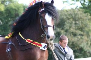 North Wales Shire Horse Society