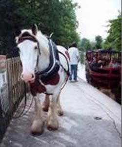 Horse Drawn Boat Company