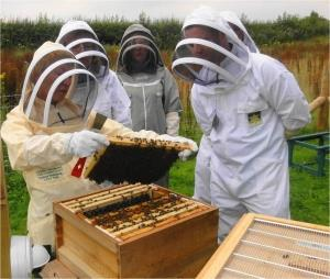 National Beekeeping Centre