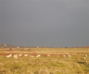 RSPB Old Hall Marshes Nature Reserve